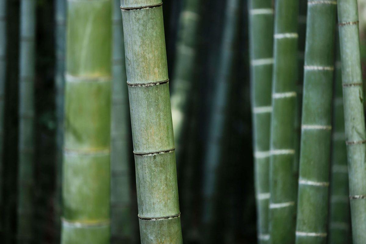 Trashless | Inspired by nature | Bambus